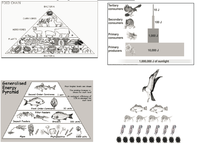 Apes Food For Thought Trophic Levels Unifinished Apes By